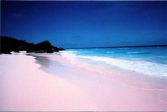 Bermuda Pink Sand Beach - Image by Le Font, http://lefact.16mb.com/onceuponafact/