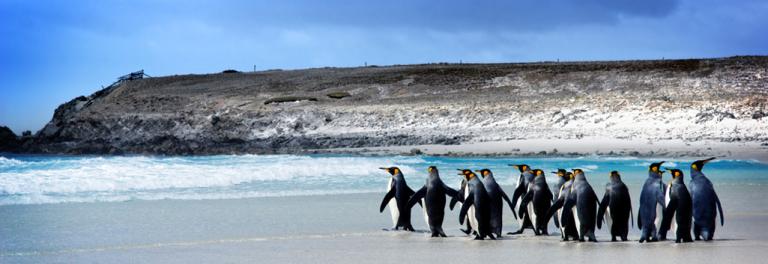 slider_penguins